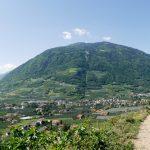 Weinanbau in den Bergen mit Panoramablick über das Meraner Land