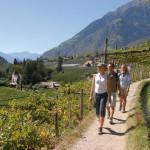 Wandern in den Weinbergen